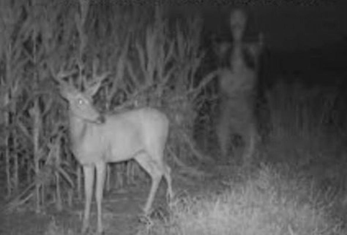 """Unidentified Creature"" Spotted in Chesnee SC on Trail Cam"