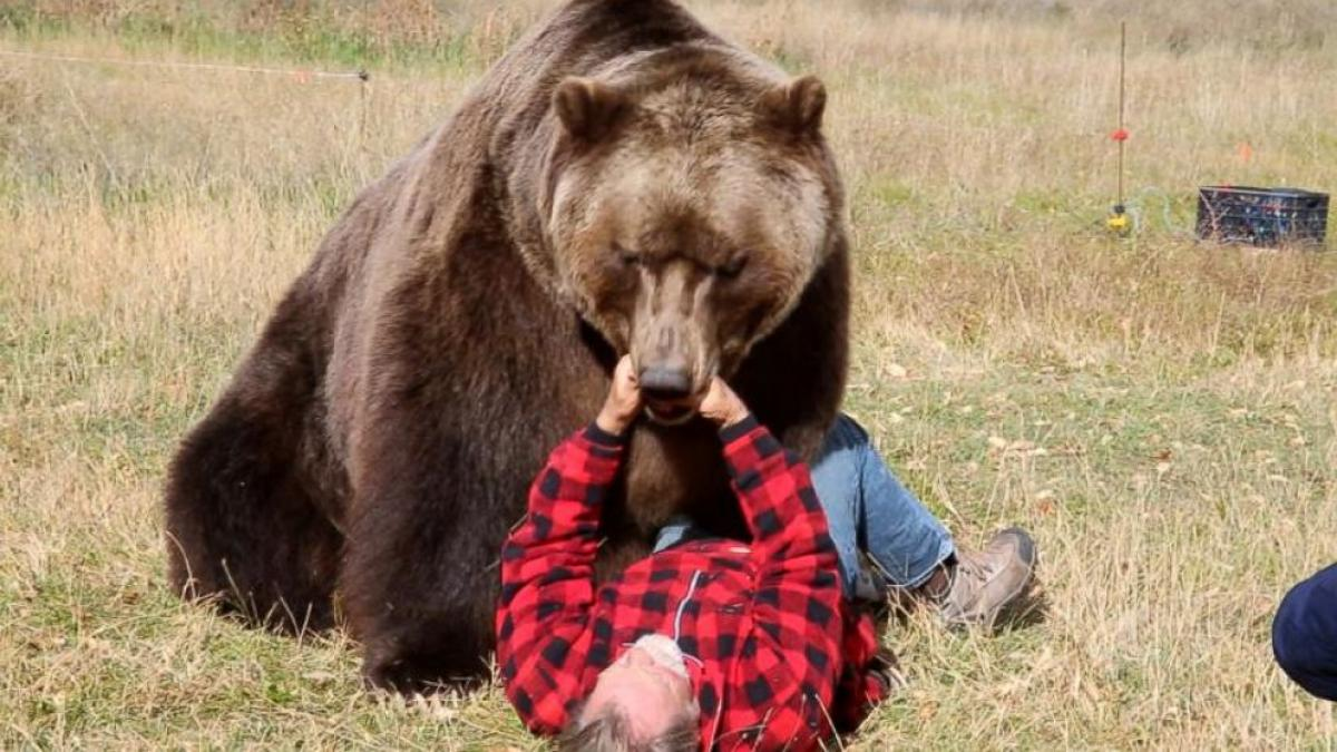 Grizzly Bear mauls Jack Black